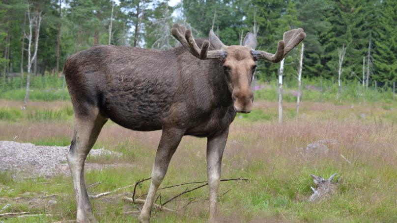 Hunter Shoots Son Dead After Mistaking Him For Moose