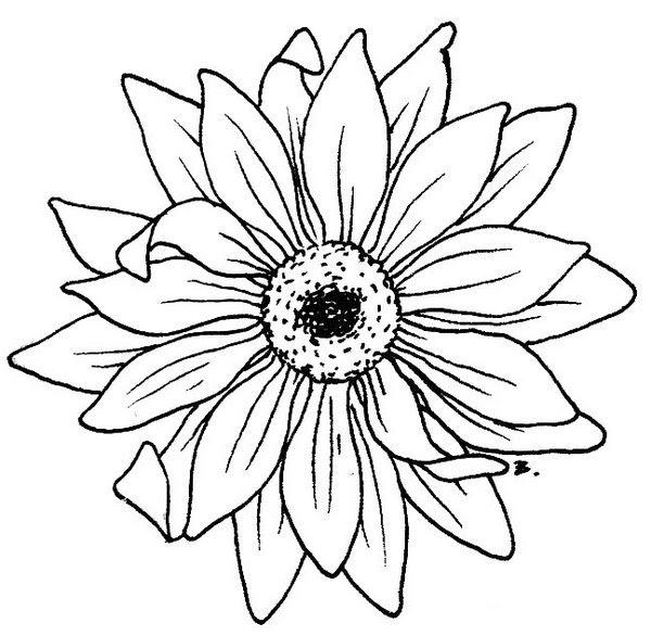 Free Sunflower Line Art Download Free Clip Art Free Clip Art On Clipart Library