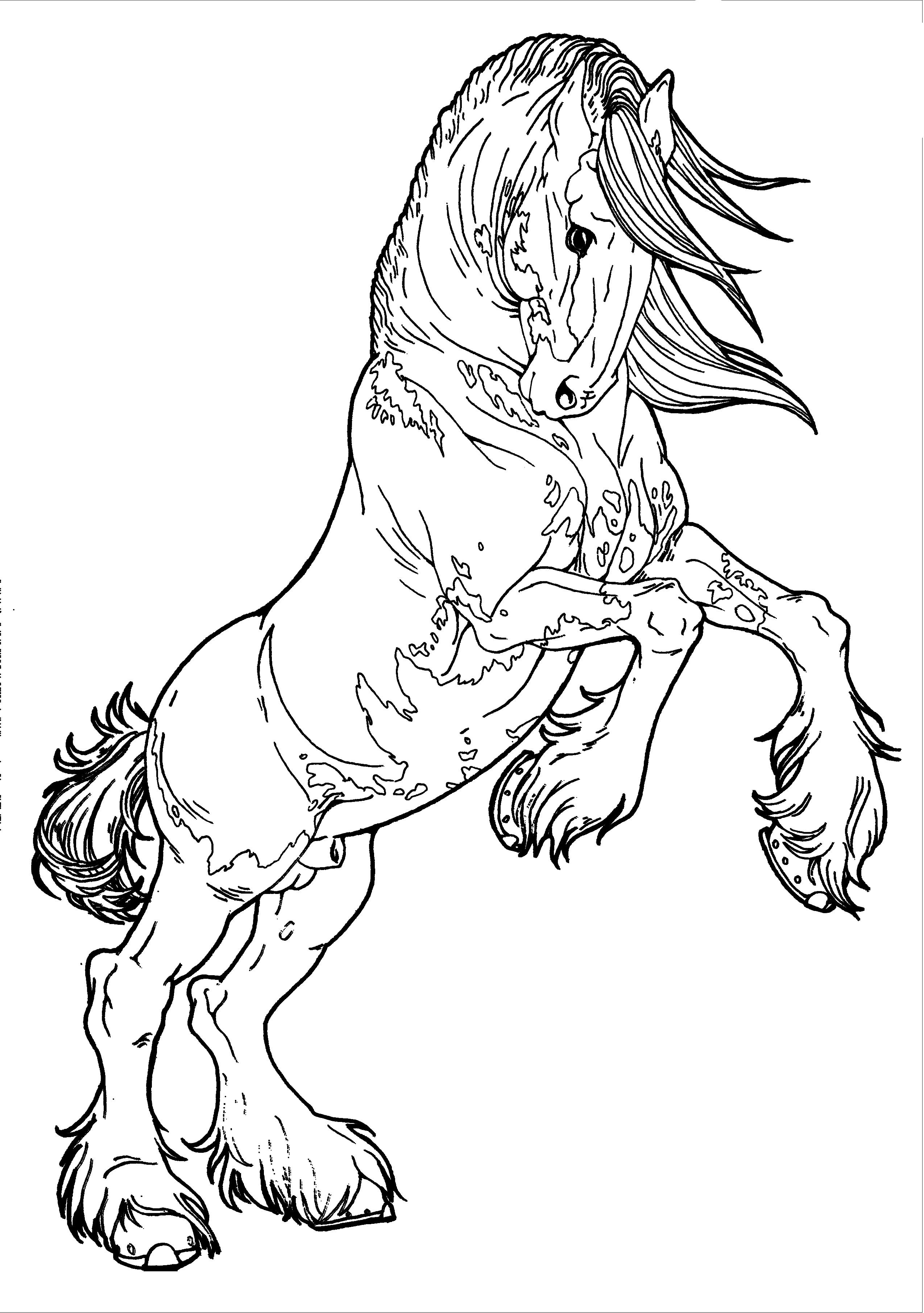 Horse Rearing Up Drawing at GetDrawings | Free download