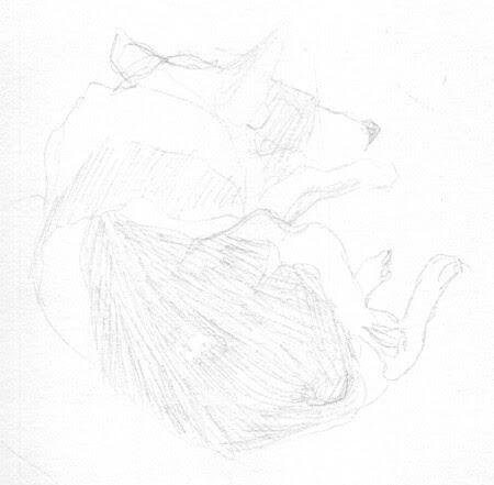 fish dog 1