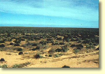 Treeless Tracts of the Nullarbor