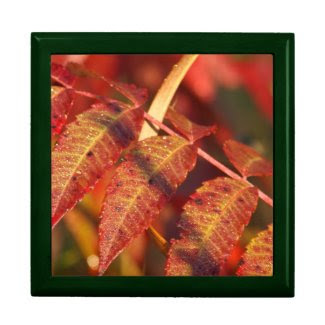 Autumn Leaves Trinket Box