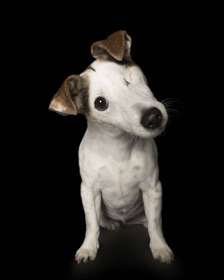 Alex Cearns perros minusvalidos 2