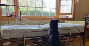 Heartbroken Pup Sits Vigil at His Father's Hospital Bed Waiting for Love