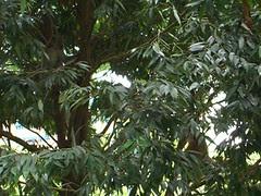 Monkeys spotted at Yishun Park_b_020106
