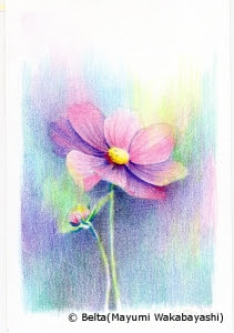 Beltaのcolored Pencil Gallery 色鉛筆ギャラリー 塗り絵 コスモス