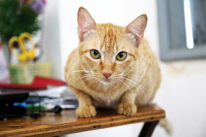 ¿Cuál es la composición del pienso para gatos esterilizados?