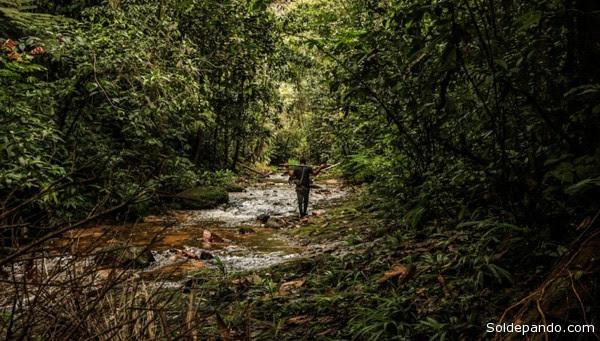 El bosque amazónico ocupa dos quintas partes del territorio sudamericano y alberga la mayor cantidad de especies forestales del mundo. | Foto Sérgio Vale, Agência Notícias do Acre
