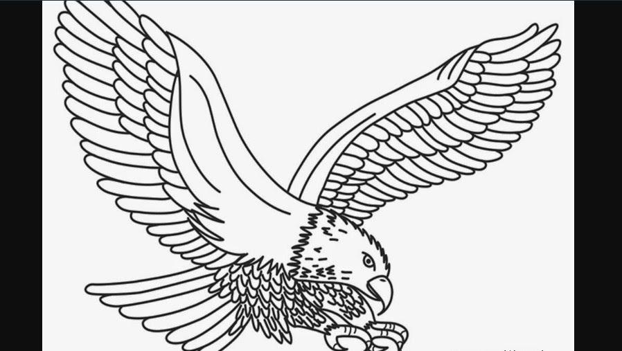 paling inspiratif sketsa burung garuda asli