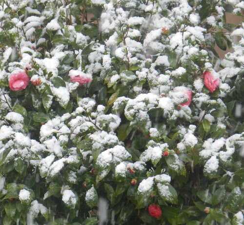 todayflowersDSCN3591
