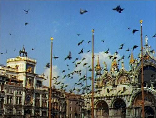 summertime_sanmarco_pigeons