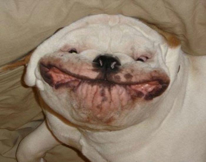happiest_dogs_on_the_internet_36 (700x549, 84Kb)