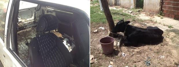 Depois de resgatado pelos policiais, boi foi devolvido ao dono  (Foto: Renato Medeiros)