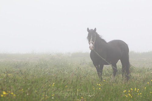 Horse In Fog by Megan Lorenz