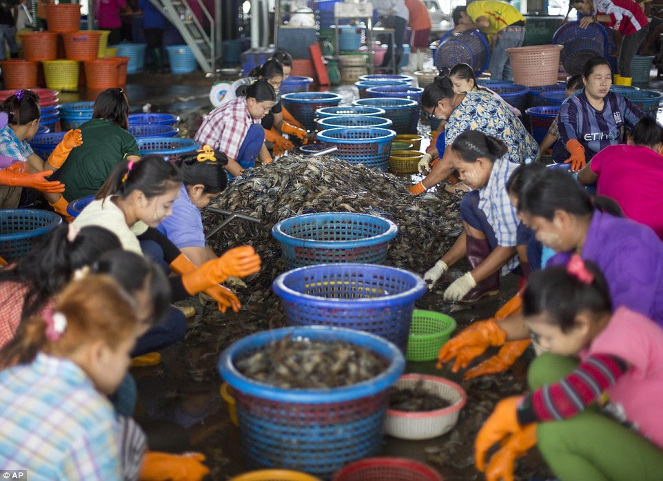 Backbreaking: Female workers, wearing a yellowish cosmetic paste known as thanka on their cheeks, sort shrimp at a market in Mahachai, Thailand.Poor migrant workers and children are being sold to factories and forced to peel shrimp that ends up in global supply chains