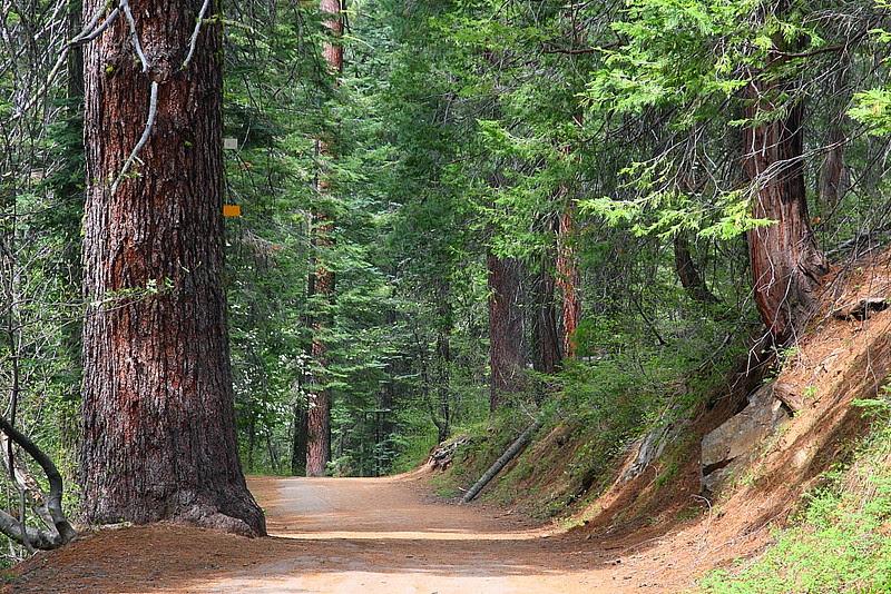 IMG_3530 Tuolumne Grove of Giant Sequoias