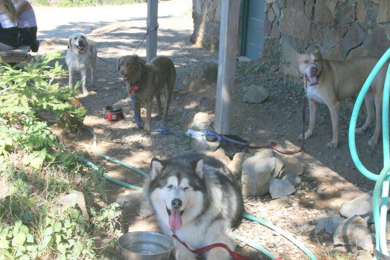 Dog station