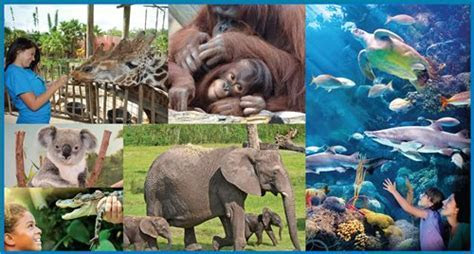 Discount Combo Tickets Now on Sale! Tampa's Lowry Park Zoo