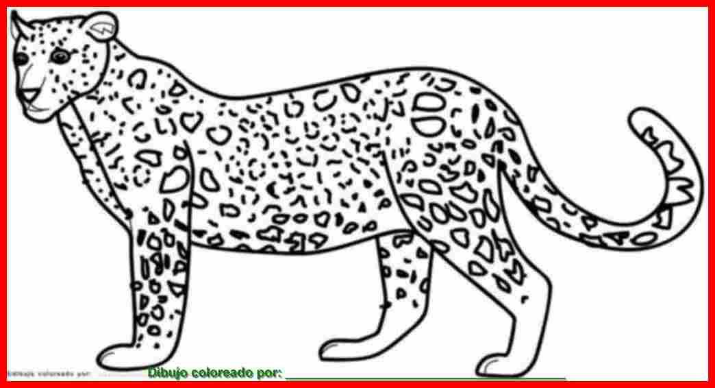 Dibujo De Jaguar Para Colorear E Imprimir