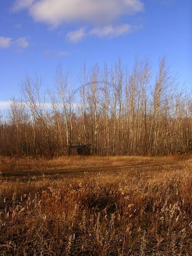 Orillia - November in Brown