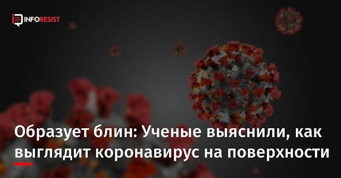 Образует блин: Ученые выяснили, как выглядит коронавирус на поверхности