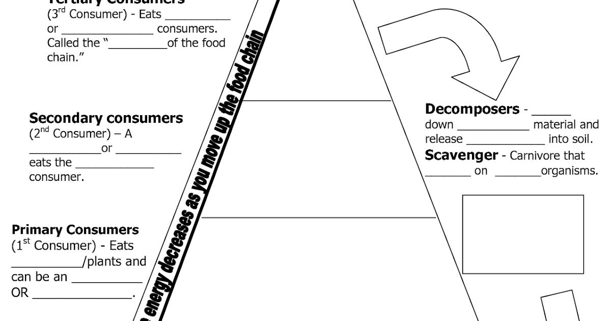 Population Pyramid Worksheet Answer Key - worksheet