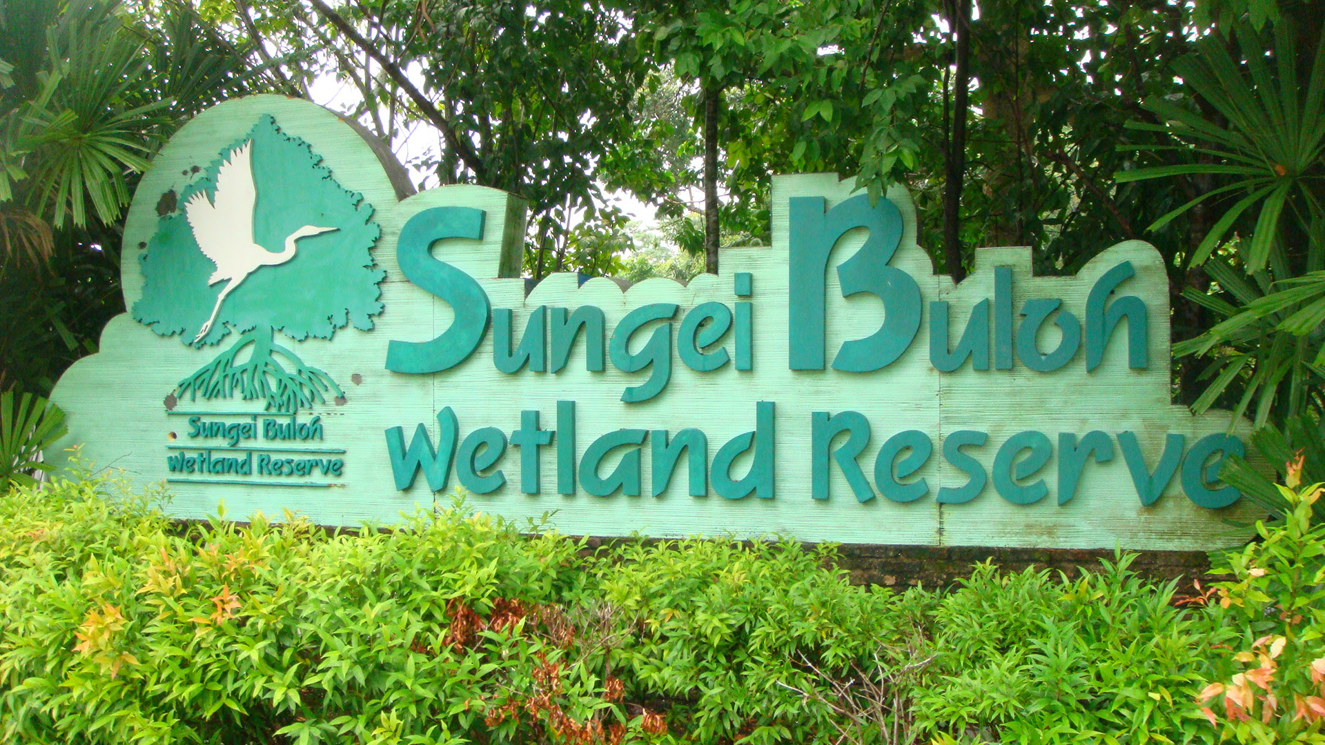 Sungei Buloh Wetland Reserve Singapore Location Map,Location Map of Sungei Buloh Wetland Reserve Singapore,Sungei Buloh Wetland Reserve Singapore accommodation destinations attractions hotels map reviews photos pictures,Sungei Buloh Nature Park,sungei buloh wetland reserve plants migratory birds history crocodile mangrove
