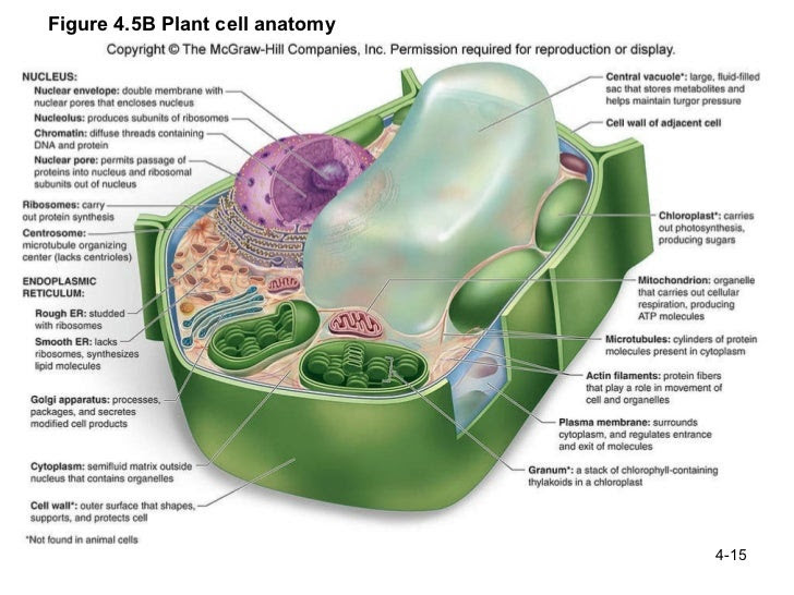 ch 4 structure and function of cells 15 728