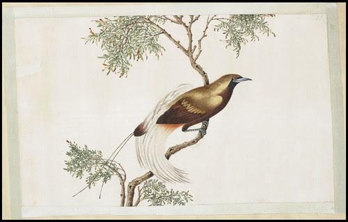 Bird Album i