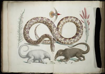 Albertus Sebus - wunderkammer image of animals