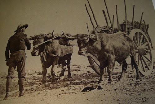 Boyero en Toledo. Cantareras frente a la Cava. The Hispanic Society of America. Foto Jean Laurent, 1874-92