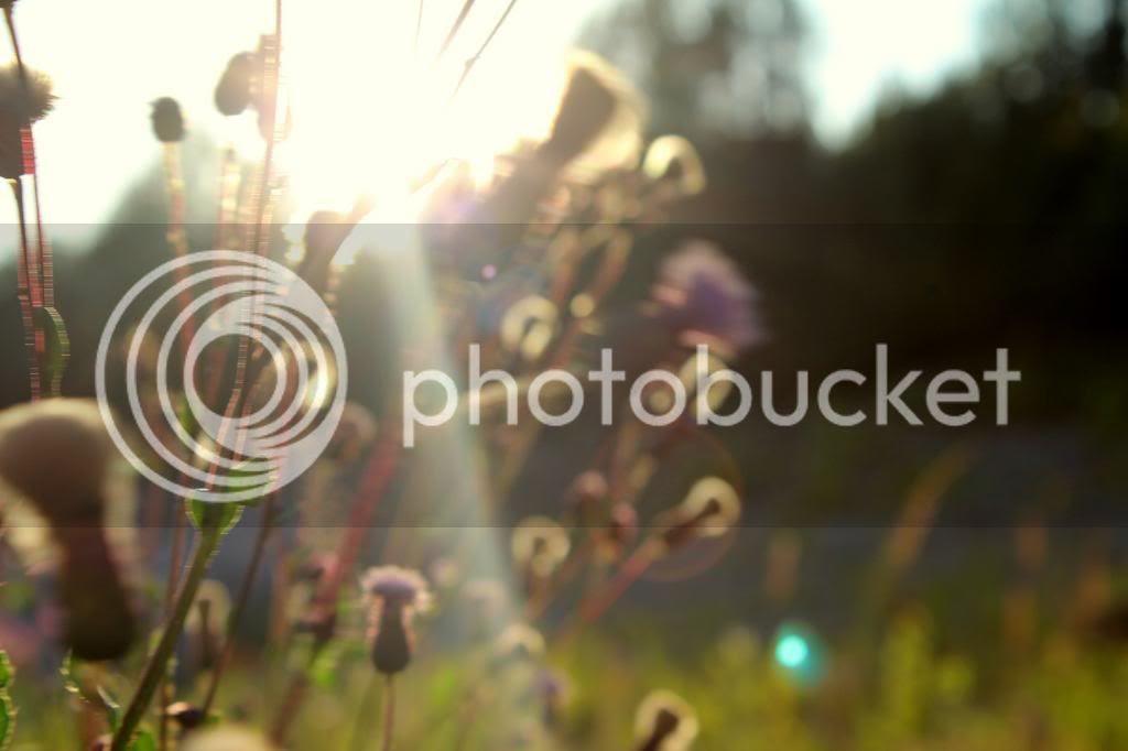 photo viimekesauml2_zps75e2d1bd.jpg