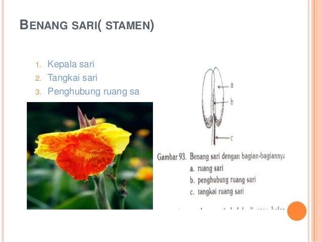 Fantastis 21 Gambar Bunga Kembang Merak Dan Bagian Bagiannya Gambar Bunga Hd