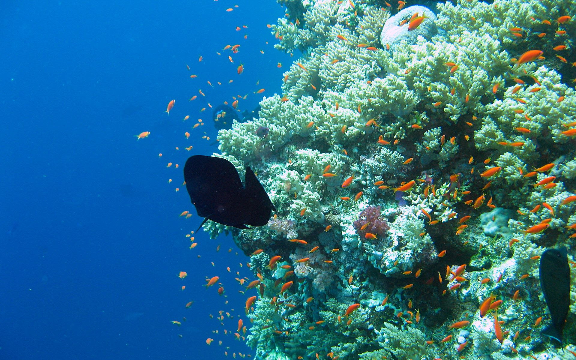 Underwater Photography images Underwater HD wallpaper and
