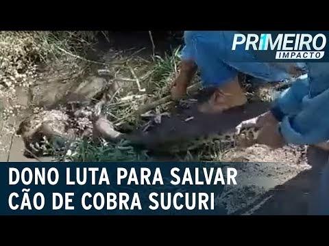 Vídeo: cachorro é atacado e enrolado por cobra sucuri