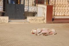 Kash Main Bhi Hota Ek Kutta Is Jahan Main by firoze shakir photographerno1