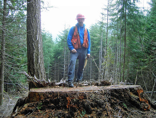 Jeff Penman, an area measurement specialist from the US Forest Service's Pacific Northwest Regional office, stands atop the stump of an old-growth tree felled illegally in Olympic National Forest. The tree was estimated to be at least 300 years old. Photo/U.S. Attorney's Office for the Western District of Washington.