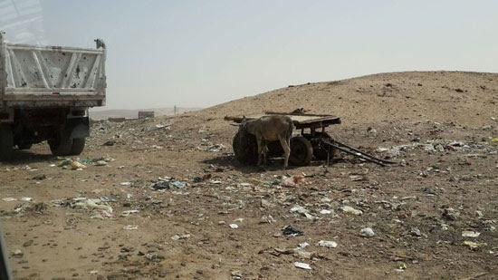صحافة المواطن ، صور وابعت،   منطقة اثرية،مقلب للقمامة ، ماوى للكلاب ، المنطقة الجنوبية، اسيوط  (4)