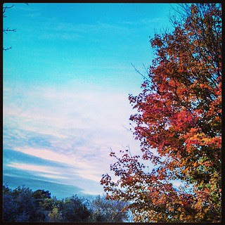Last night #sky #tree #fall #leaves