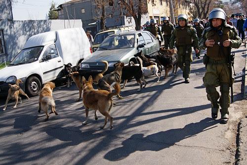 Perros protestantes by Alejandro Bonilla