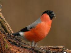 Fundacja Nasza Ziemia Aktualności 2013 12 19 Ptaki Zimujące W