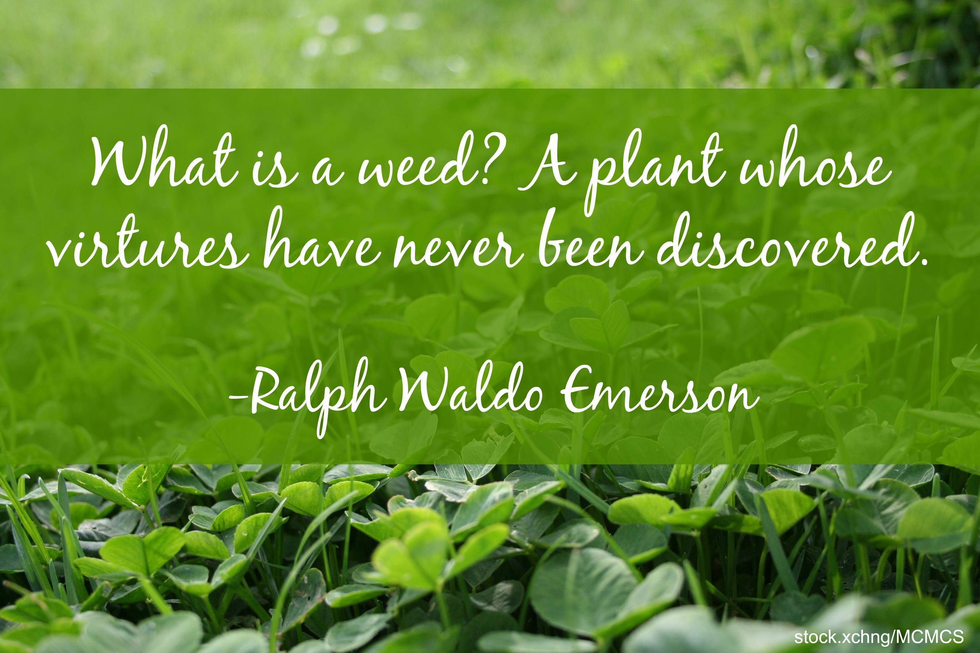 Image Gallery Garden Quotes