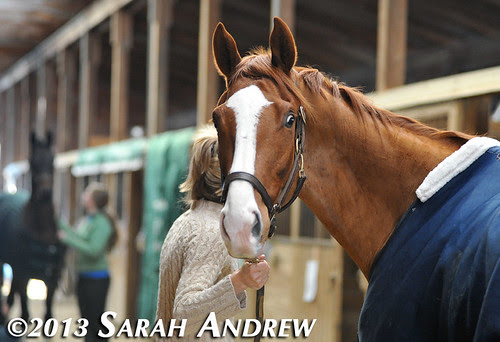 Alluring Punch at the MD Horse World Expo