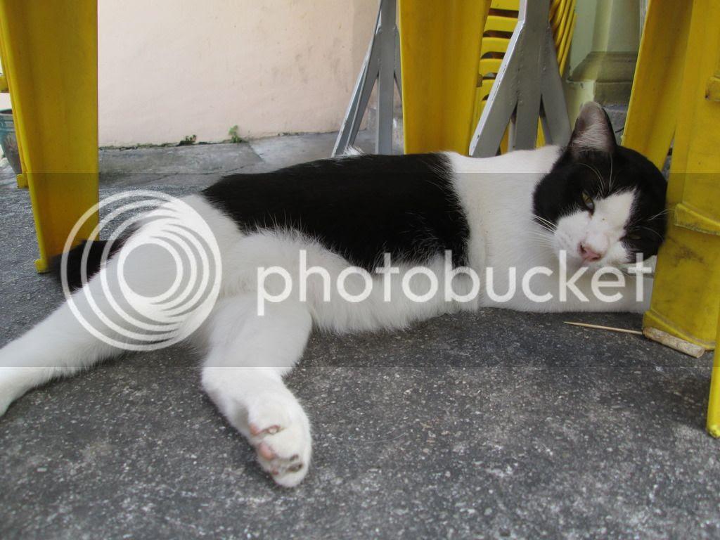 photo CatChinatown18Jul02.jpg