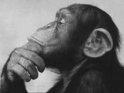 http://gettingstronger.org/wp-content/uploads/2010/08/thinking-monkey1.jpg