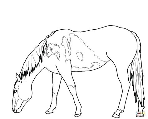 coloring pages wild horses  getcoloringscom