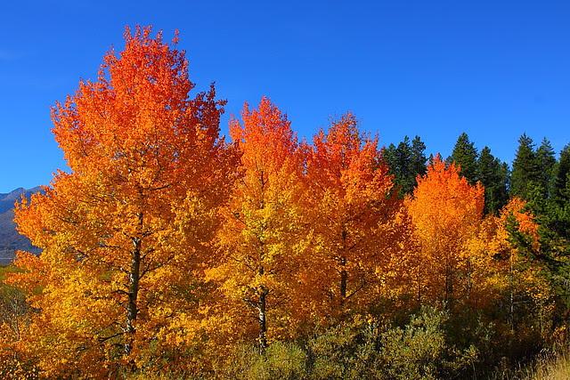 IMG_8619 Autumn Foliage