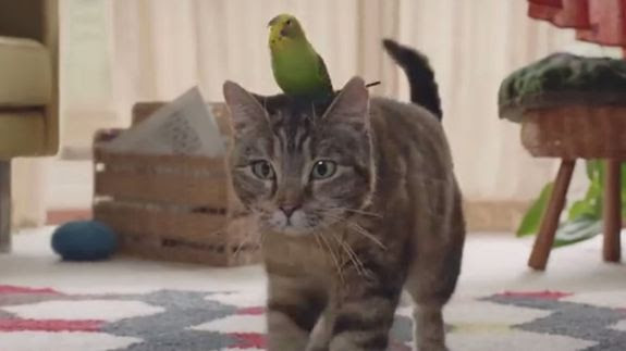 Cat-and-budgie.jpg