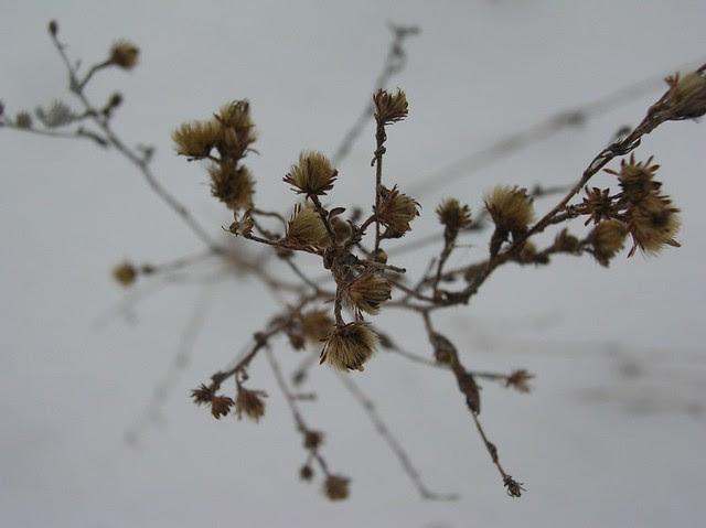 A Winter Plant