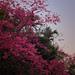 085 spring